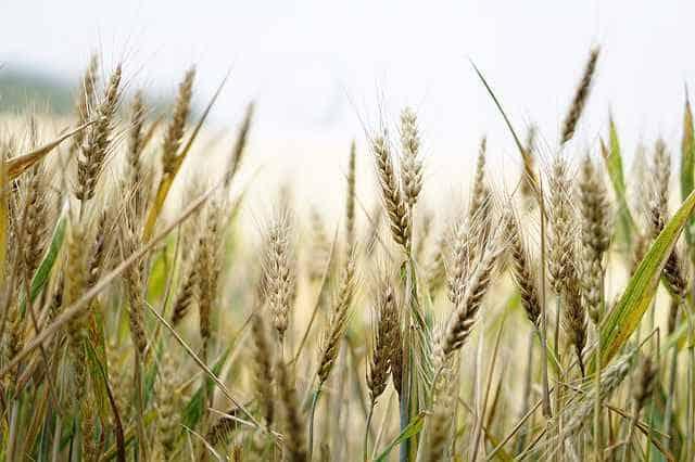 Govt Schemes for Agriculture